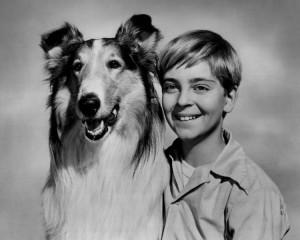 Lassie_Timmy_1955